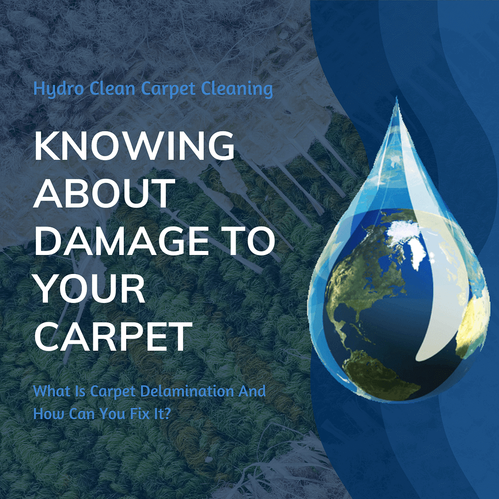 featured image knowing about damage to your carpet