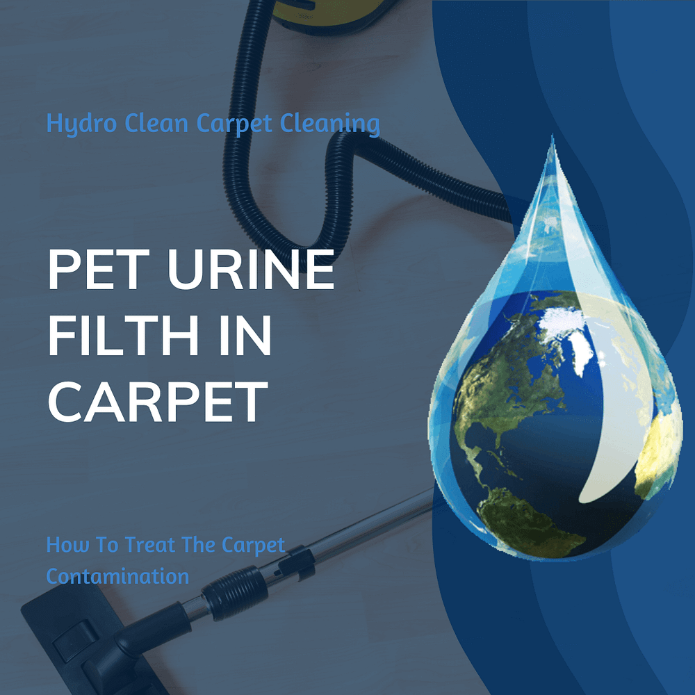 featured image pet urine filth in carpet